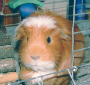 My beloved pig was never spooky. She was, however, crafty, ornery, mischievous and a cute fuzzy little bugger.