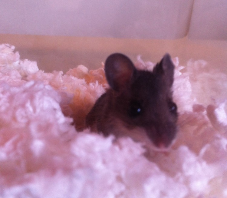 Meet Moxie